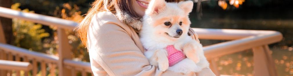 アニコム損害保険株式会社、アイペット損害保険株式会社、プリズムコール(日本アニマル倶楽部株式会社)各種ペット保険対応